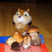 Бурундук с грибами. :: Алексей Цветков