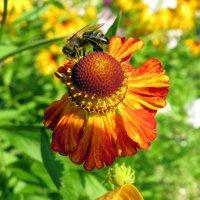 Пчела :: Павел Галактионов