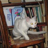 В глазах  кошки отражается Космос, бесконечная  Вселенная... :: Алекс Аро Аро