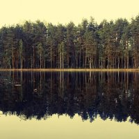 Лесное озеро. :: Елена Михайлова .