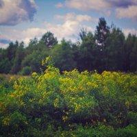 Где-то на Белорусской границе :: Marika Hexe