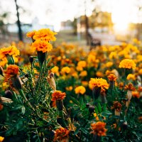 Цветочный период :: Сергей Алексеев