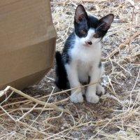 Котёнок. :: Валерьян Запорожченко