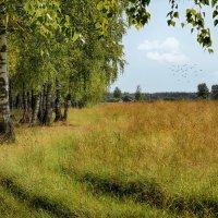 летние денечки :: Сергей Бойцов