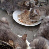 На аппетит не жалуемся! :: Нина Корешкова