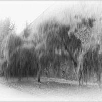 когда деревья плачут :: Jiří Valiska