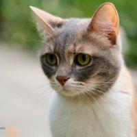 грустный котейка :: StudioRAK Ragozin Alexey