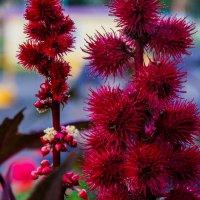 Осенние цветы! :: Ирина Антоновна