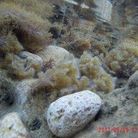 Морские водоросли :: Giant Tao /