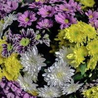 Цветы-Цветы :: Tatiana Poliakova