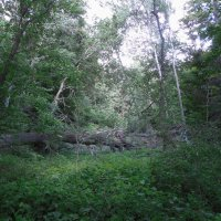 сказочный лес :: Александр Борисович