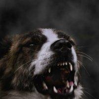 Стоматологический портрет :: Va-Dim ...