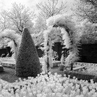 Парк цветов :: Сергей Козинцев