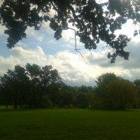 Ранняя осень :: Сапсан