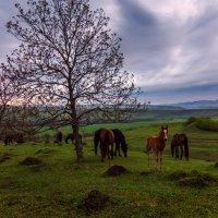 В горах Кавказа :: Альберт Беляев