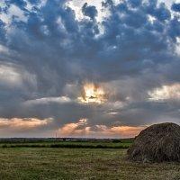 Ещё не скошены все травы :: Марина Шанаурова (Дедова)