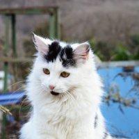 Кошка :: Олеся Колитченко
