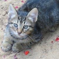 Котёнок!!! :: Герович Лилия