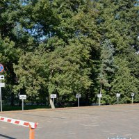 Безымянное кладбище возле администрации Нижнего Новгорода :: Антон Банков
