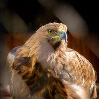 Птицы :: Михаил Гашиков