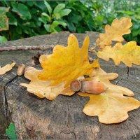 Вот и Осень :: °•●Елена●•° Аникина♀