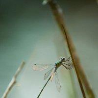 dragonfly :: true fake