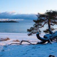 Ладожское озеро. Койонсаари. :: Наталия Владимирова