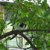 Мама, я, наверно, дикий кот! :: - Ivolga