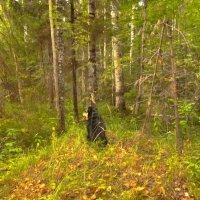 В лесу :: Mary Коллар
