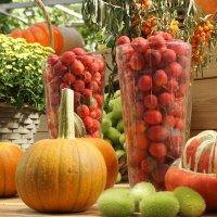 Краски Осени 2017 :: mirtine