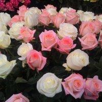 Выставка цветов :: Светлана