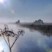 Утро на озере. :: Сергей Ключарёв
