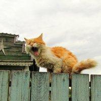 Пробуждение :: Андрей Снегерёв