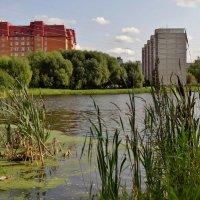 городское озеро :: Валентина. .
