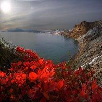 Догорая в листьях осень... :: viton