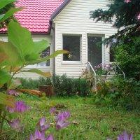 Colchicum autumnale :: silvestras gaiziunas