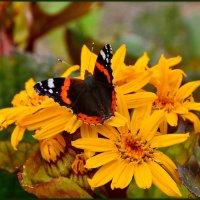 на цветок красавица  присела.... :: Валентина Папилова