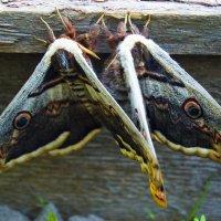 Бабочки :: Наталья (ShadeNataly) Мельник