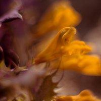 Цветочное безумие :: Юля Грек
