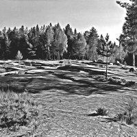 Листы каменной книги(Залавруга-Петроглифы) :: Анжела Пасечник