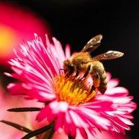 Инструмент для пчеловода, для меня же - кадр года! :: KALIOT