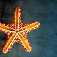 Морская звезда :: Tatiana Belyatskaya