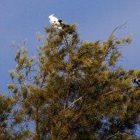 Приключения белого Попугая или Странное свидание ... :: Aleks Ben Israel