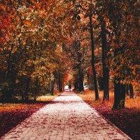 Осень пришла незаметно :: Blaga