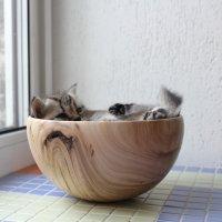 Котенок в чашке. :: андрей громов