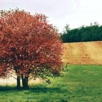 природа :: Клаудия Мойш