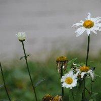 И все, как в жизни: кто начинает, а кто-то  благодарно в сторону отходит.... :: Tatiana Markova