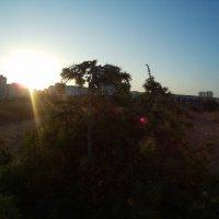 Можжевельник в лучах рассвета :: Giant Tao /