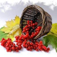 Осенний привет ! :: Валерий Хинаки