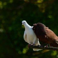 я твой навеки... :: linnud